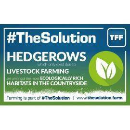 Hedgerows Create Ecologically Rich Habitats - Graphic 10 - 960mm x 600 mm Outdoor Banner, image