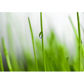 Fresh Grass Check, image